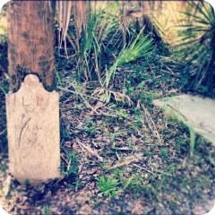 Civil War Graves - Charleston